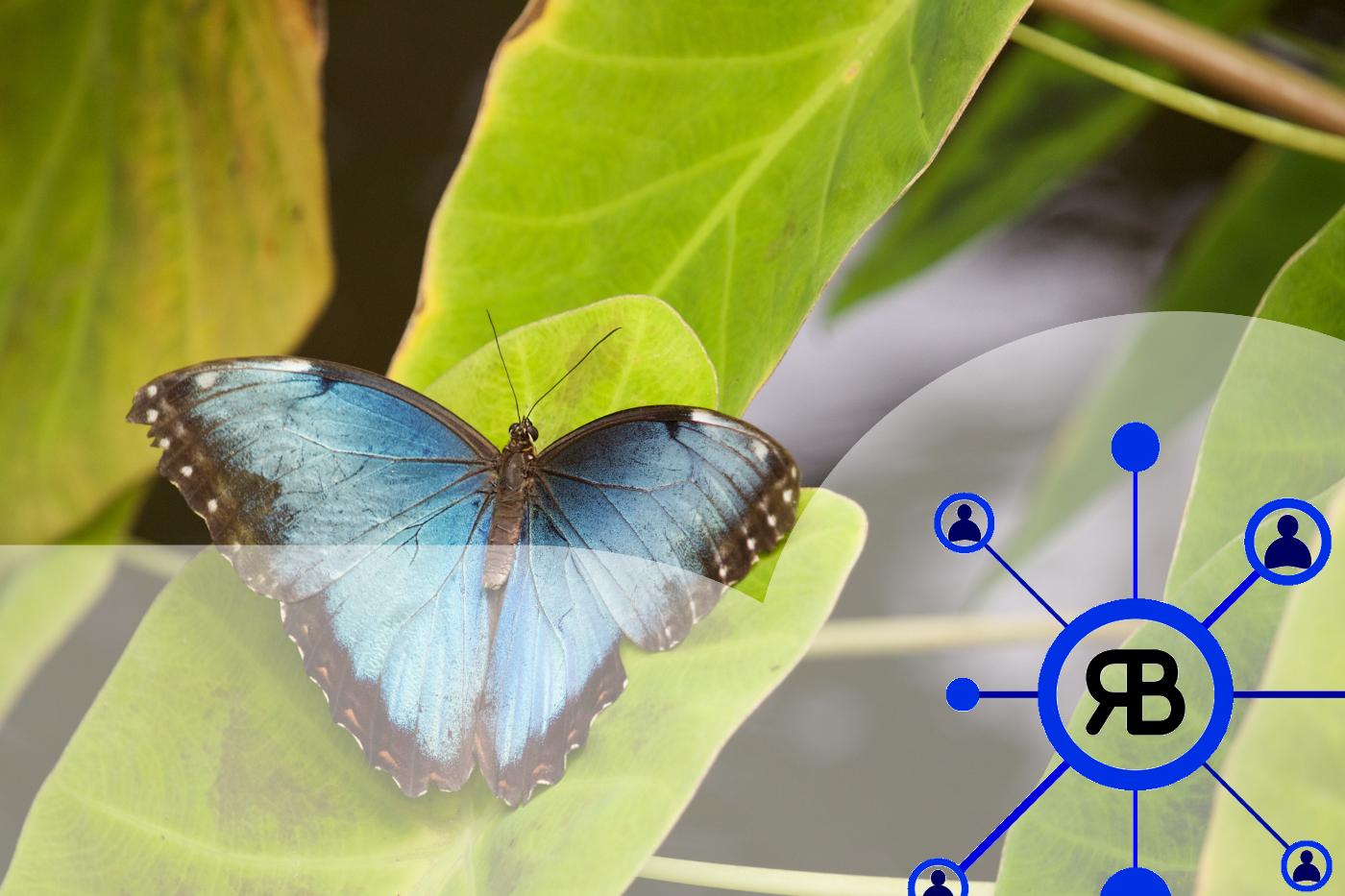 le cocon sémantique fait de votre site un beau papillon bleu
