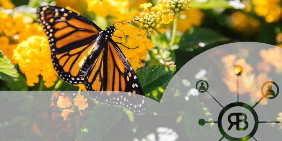 Papillon dans les fleurs pour la croissance